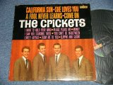The CRICKETS - CALIFORNIA SUN/SHE LOVES YOU  (Ex+/Ex+++ A-1:Ex ) /  1964 US AMERICA ORIGINAL  MONO  Used  LP